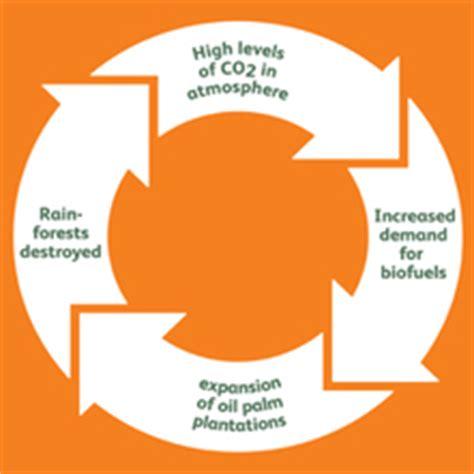 Deforestation Essay Examples Kibin